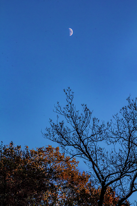 Moon and Fall Foliage by Robert Ullmann